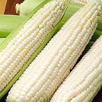 بذور 20/ حزمة، بذور الذرة وبذور الخضروات والذرة الحلوة الذهبية(China (Mainland))