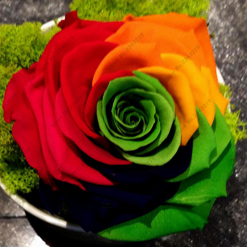 Crazy promotion rainbow rose seeds diy home garden for Buy rainbow rose seeds