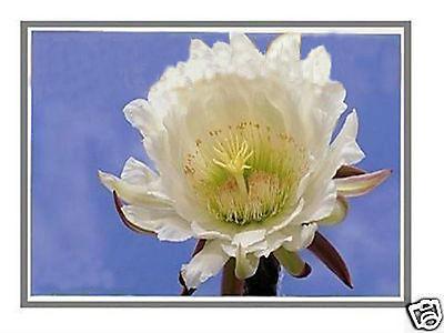 """Здесь можно купить  NEW LED DISPLAY FOR HP EliteBook 2710P LAPTOP LCD SCREEN 12.1"""" WXGA NEW LED DISPLAY FOR HP EliteBook 2710P LAPTOP LCD SCREEN 12.1"""" WXGA Компьютер & сеть"""