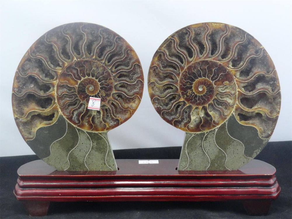 905g NATURAL CUT CRETACEOUS AMMONITE FOSSIL Sliced + STAND 181g(China (Mainland))