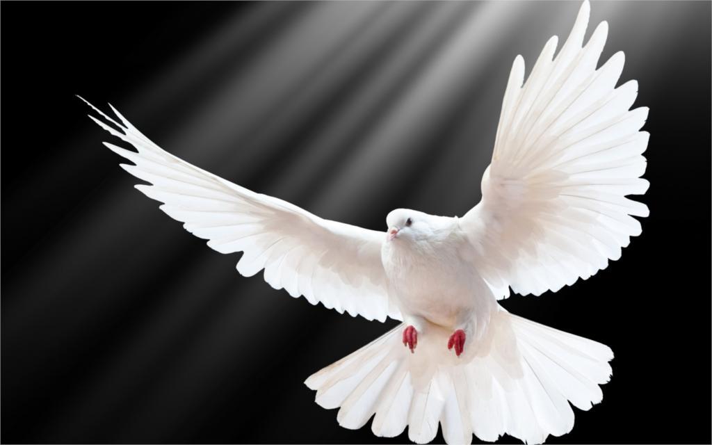 Risultati immagini per pomba do espirito santo
