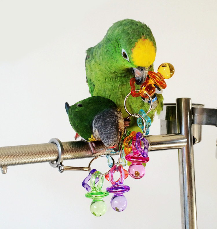 Parakeet Toys And Accessories : New arrival colorful acrylic parrot toy chew