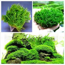 Freeshipping Moss on Mesh Aquatic Aquarium Plants Seeds EASY and Java Flame Moss BEST VARIETY 5 gram (China (Mainland))