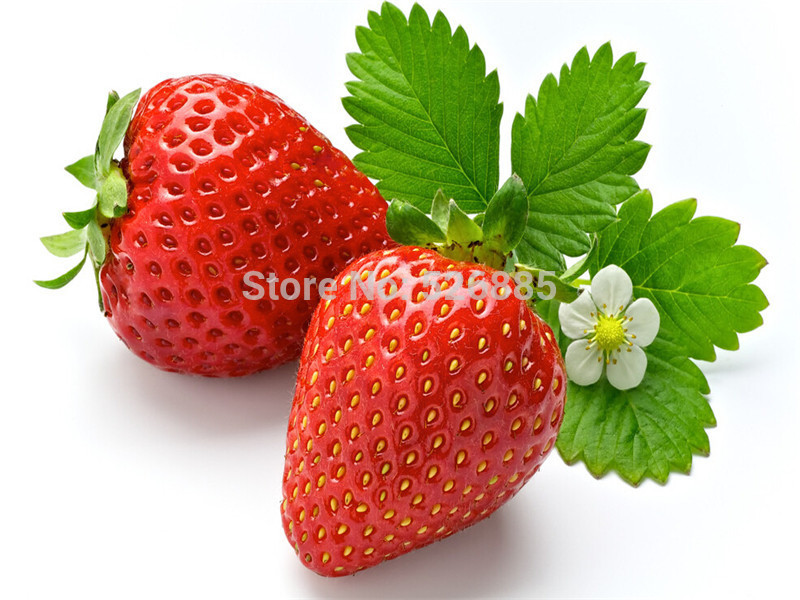 strawberry seeds, Four Seasons planting seeds Fragaria ,DIY Home and Garden. - 50 Seed particles(China (Mainland))