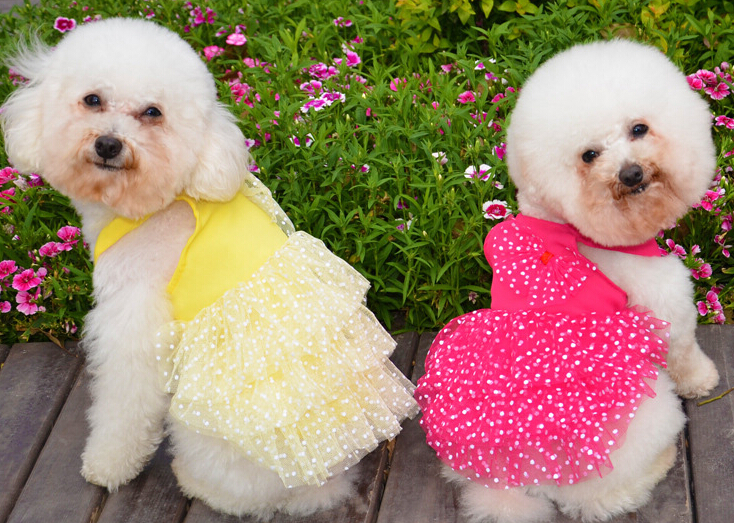 New arrival lace dress pet dog clothes Teddy spring summer pet clothes Chihuahua dress princess pet supplies(China (Mainland))