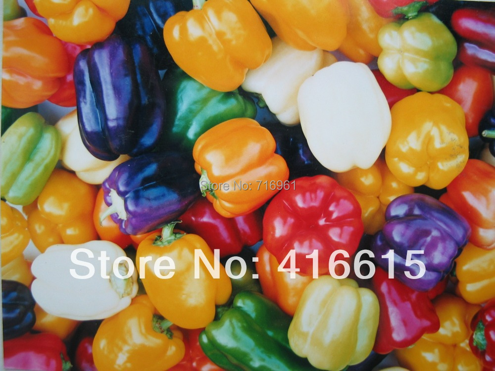 100 SEEDS CHINA WONDER MULTI-COLOR SWEET PEPPER SEEDS * GREEN FOOD * SWEET BELL PEPPER * Potted Ornamental,Bonsai(China (Mainland))