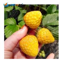 Vegetables And Fruit Seeds Yellow Strawberry Seeds Bonsai Plants Seeds For Home  Garden 100 Seeds