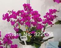 Карликовое дерево Nini xr/93 100pcs/lot xr-936